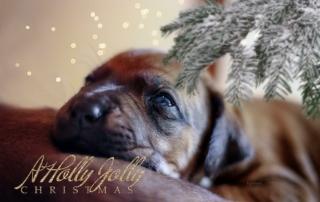 A Holly Jolly Christmas | Kasungu Ridgeback Kennel | Essen