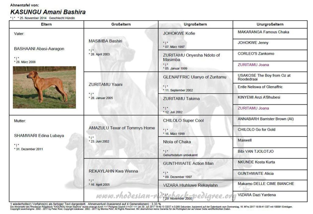 KASUNGU | Rhodesian Ridgeback Züchter | Essen | NRW