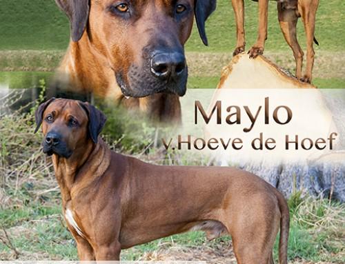 Lubaya und Maylo haben für Nachwuchs gesorgt