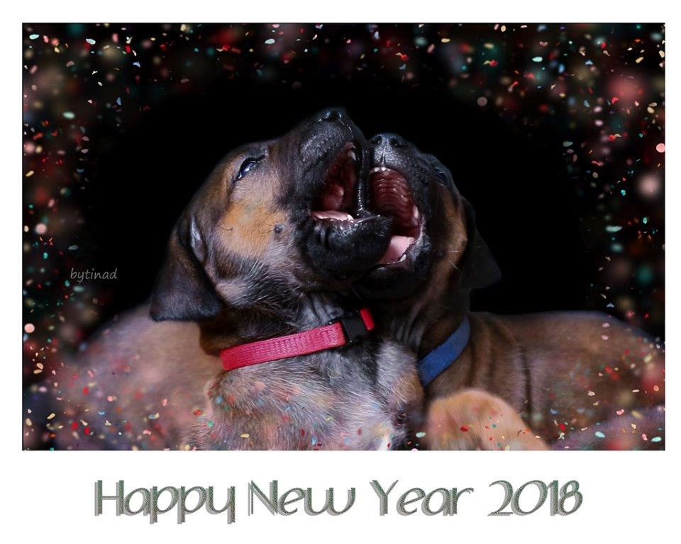 Happy New Year 2018 | KASUNGU Ridgeback Kennel | Essen